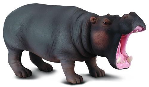 Hipopotam - brak